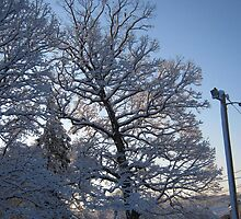 Feb. 19 2012 Snowstorm 122 by dge357