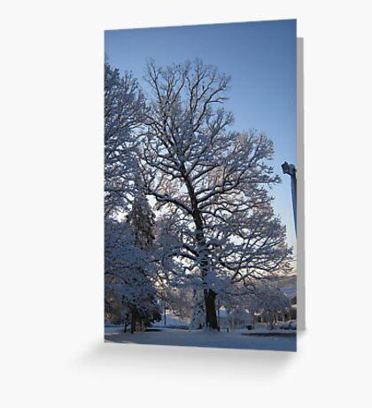 Feb. 19 2012 Snowstorm 122 Greeting Card