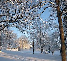 Feb. 19 2012 Snowstorm 126 by dge357