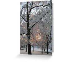Feb. 19 2012 Snowstorm 132 Greeting Card