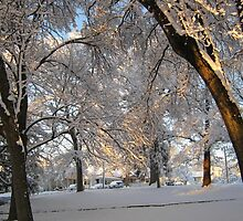 Feb. 19 2012 Snowstorm 137 by dge357