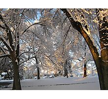 Feb. 19 2012 Snowstorm 137 Photographic Print