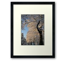 Touch Of The Morning Sun Framed Print