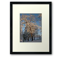 Feb. 19 2012 Snowstorm 144 Framed Print