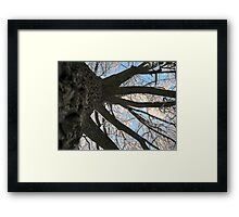 Feb. 19 2012 Snowstorm 146 Framed Print