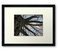 Feb. 19 2012 Snowstorm 146 Framed Print