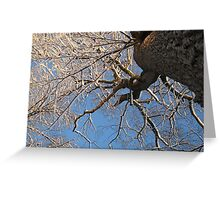 Feb. 19 2012 Snowstorm 149 Greeting Card