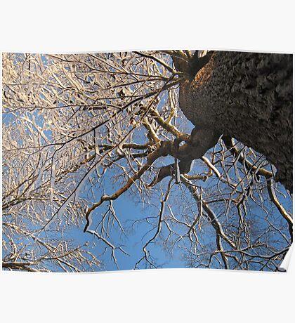Feb. 19 2012 Snowstorm 149 Poster