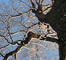 Feb. 19 2012 Snowstorm 150 by dge357