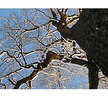 Feb. 19 2012 Snowstorm 150 Photographic Print
