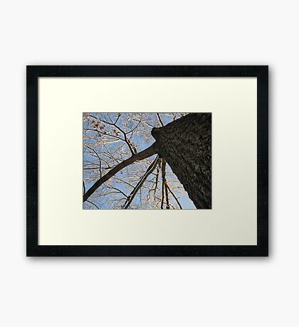 Feb. 19 2012 Snowstorm 151 Framed Print