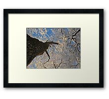 Shivering  Framed Print