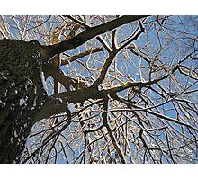Feb. 19 2012 Snowstorm 158 Photographic Print