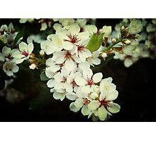 Summer Blossoms Photographic Print