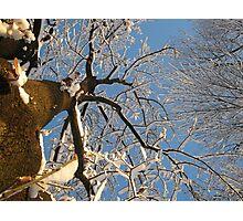 Feb. 19 2012 Snowstorm 159 Photographic Print