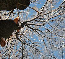 Feb. 19 2012 Snowstorm 160 by dge357
