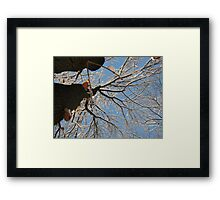 Feb. 19 2012 Snowstorm 160 Framed Print