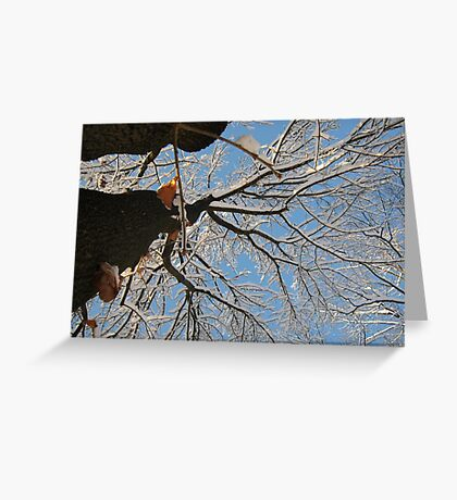 Feb. 19 2012 Snowstorm 160 Greeting Card