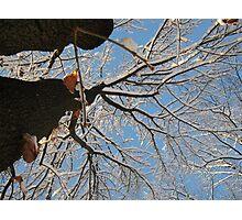 Feb. 19 2012 Snowstorm 160 Photographic Print