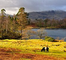 Tarn Hows, Lake District.. by embracelife