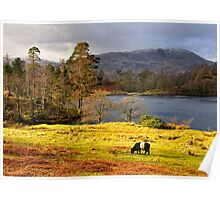 Tarn Hows, Lake District.. Poster
