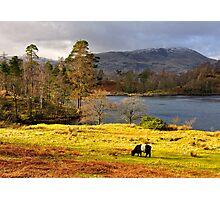 Tarn Hows, Lake District.. Photographic Print