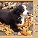 Chloe...forever love by Dan Wilcox