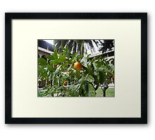 Monastir de Pedralbes:Oranges in the Cloister, Barcelona Framed Print