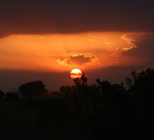 Sunset in the Savannah  by bhavini