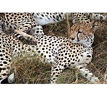 Spotted Sprawling Photographic Print