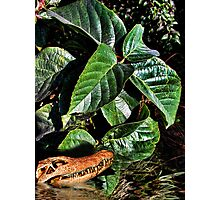Gator Skull in the Water Photographic Print