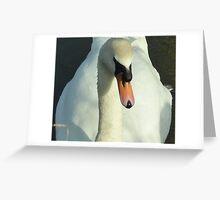 Swan swim Greeting Card