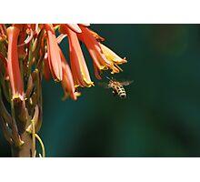 Insect macro 009 Photographic Print