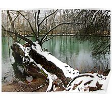 Snow on a Fallen Tree Poster