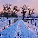 Snow Lane by Mounty