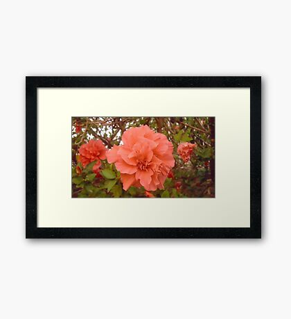 Beautiful flower Framed Print