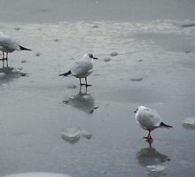 Gulls on Ice by Kat Simmons