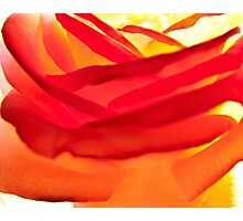 Fiery Rose I Photographic Print