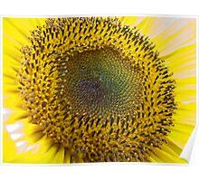 Iridescent Sunflower I Poster