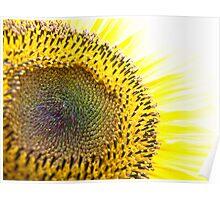 Iridescent Sunflower II Poster