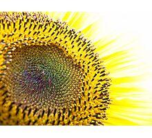 Iridescent Sunflower II Photographic Print