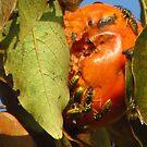 il caco ancora sulla pianta e io lo mangio.... by Guendalyn