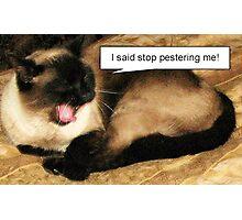 I Said Stop Pestering Me! Photographic Print