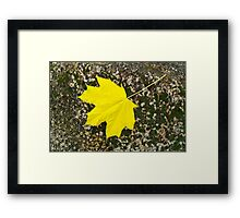Single maple leaf fallen on the surface of a large stone Framed Print