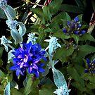 Cluster of Little Bluebells [Campanulas] by Jane Neill-Hancock