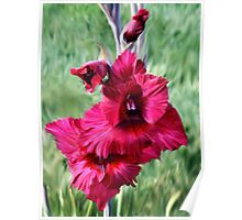 Iris At Noontime Poster