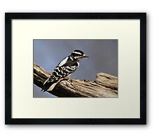 Female Downy Woodpecker Framed Print