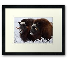 King of the Tundra Framed Print