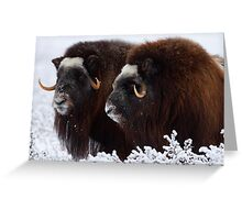 King of the Tundra Greeting Card