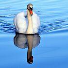Blue Mirror Swan by Stan Owen